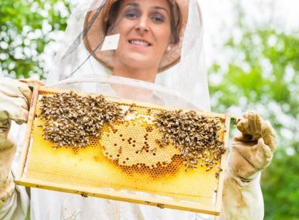 Co trzecią łyżkę pokarmu zawdzięczamy owadom zapylającym!
