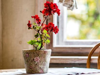Co zagraża roślinom zimą?