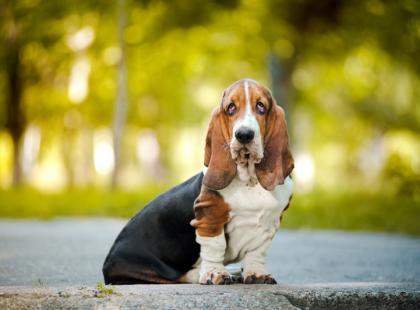 Co zagraża zdrowiu psa w mieście?