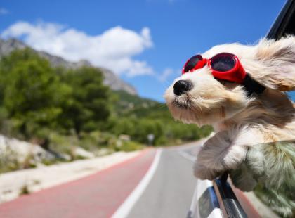 Co zrobić z psem na urlopie?