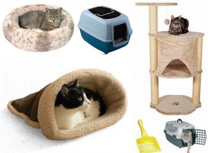 Czego potrzebuje twój kot?