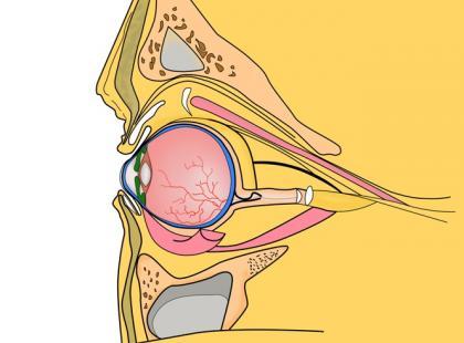 Czy można zrobić USG oka?
