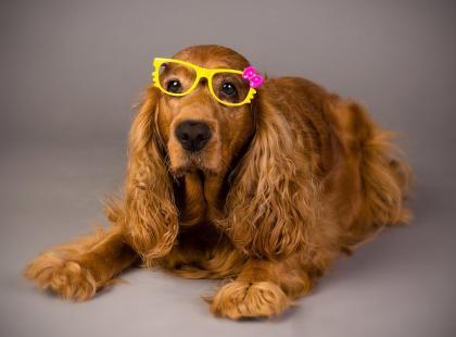 Czy na pewno wiesz, jak odróżnić suczkę od psa? W przypadku małych szczeniąt nie wszyscy to potrafią
