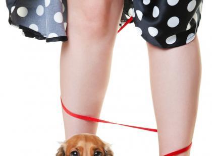 Czy pies musi chodzić na smyczy i w kagańcu?