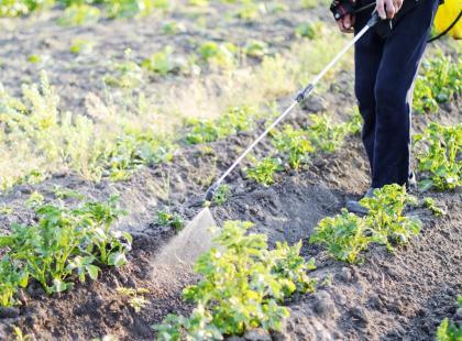 Czy środki ochrony roślin zagrażają zdrowiu i środowisku?