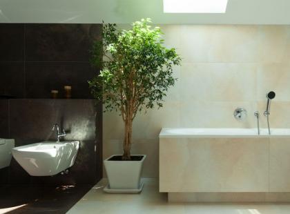 Czy w łazience można hodować kwiaty?