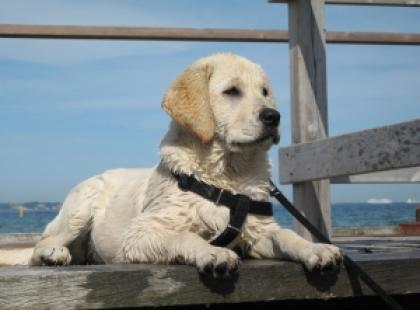 Czy warto pójść z psem na szkolenie?