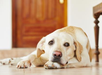 Czy wiesz co robić, gdy pies wymiotuje?