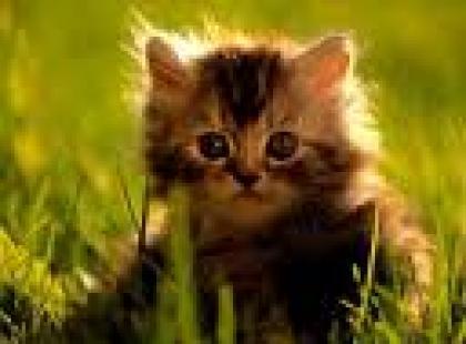 Czy wiesz jak drapać swojego kota?