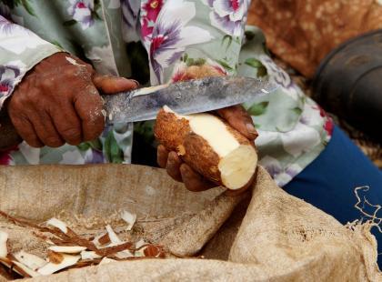 Czy wiesz jak przyrządzić maniok? Zobacz nasze sprawdzone przepisy!