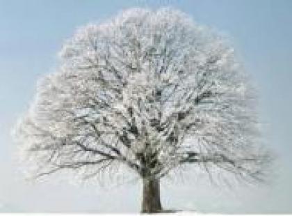 Czy wiesz, że trawa pod drzewami nie zamarza?
