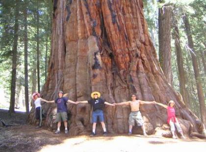 Czy wiesz, że ziarno największego drzewa świata jest wielkości główki szpilki?