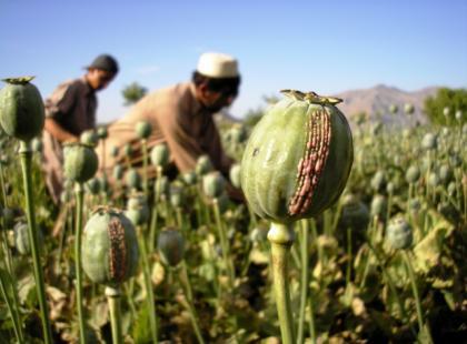 Czym jest opium?