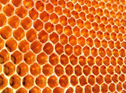 Czym jest pierzga i dlaczego jest zdrowsza niż pyłek?