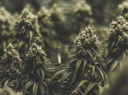Czym skutkuje palenie marihuany?