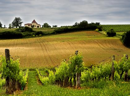 Czyżby najstarsza kraina winiarska?