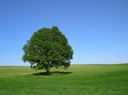 Dąb - dlaczego warto docenić to drzewo?