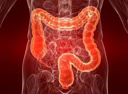 Diety w chorobach układu pokarmowego - vademecum
