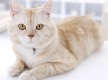 Dlaczego kot lubi zapach twoich pach?