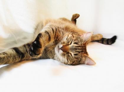 Dlaczego kot ugniata łapkami poduszkę?