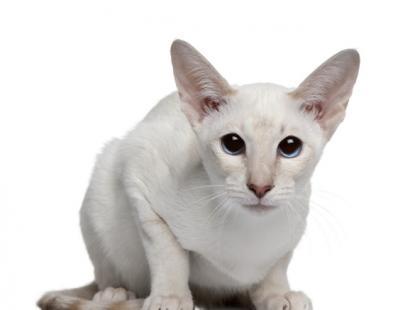 Dlaczego koty ukrywają ból?
