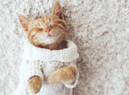 Dlaczego warto mieć kota? Oto 3 zaskakujące korzyści dla zdrowia!
