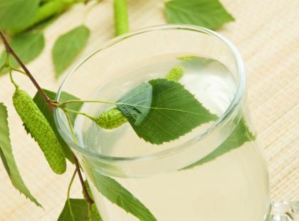 Dlaczego warto pić sok z brzozy? To samo zdrowie!
