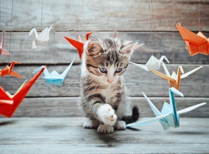 Dobierz imię do charakteru kota