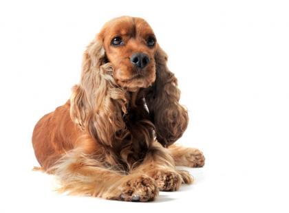 Dominacja psa w domu