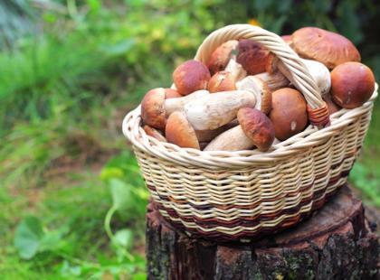 Duszenie grzybów