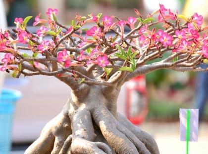 Egzotyka na parapecie - 5 niezwykłych roślin