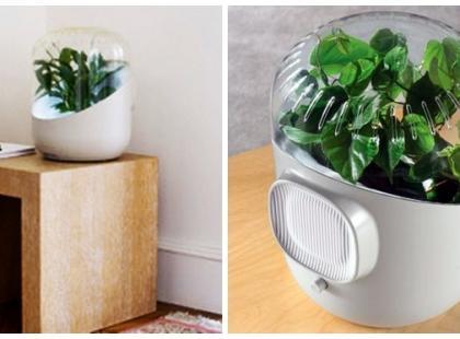 Ekologiczny odświeżacz powietrza