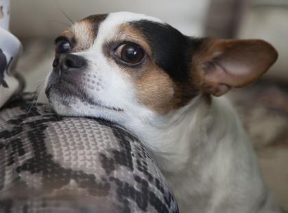 Ekstremalnie urocze! Oto 10 najsłodszych zwierzaków z Instagrama