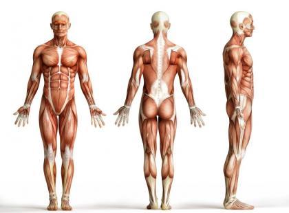 Ektomorfik, endomorfik i mezomorfik – jaki jest Twój typ budowy?