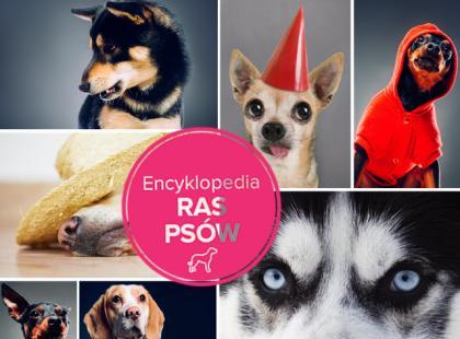 Encyklopedia ras psów
