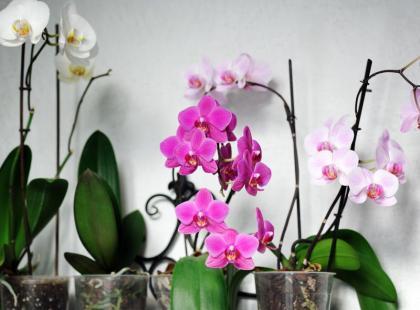 FUJ! Poznaj 4 szkodniki, które mogą skrywać się w roślinach doniczkowych