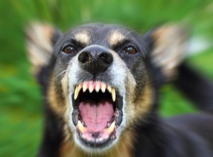 Gdy robić, gdy zaatakuje cię pies?