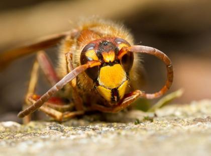 Gdy utnie cię owad