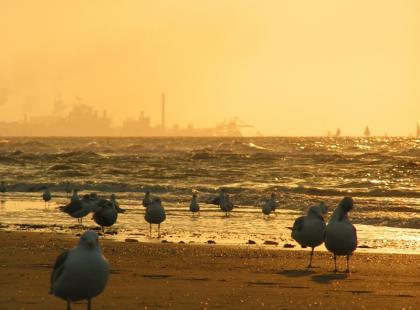 Groźne bakterie atakują Bałtyk