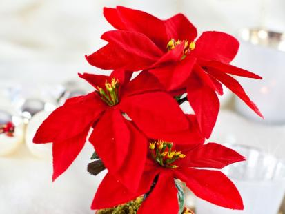 Gwiazda betlejemska na święta