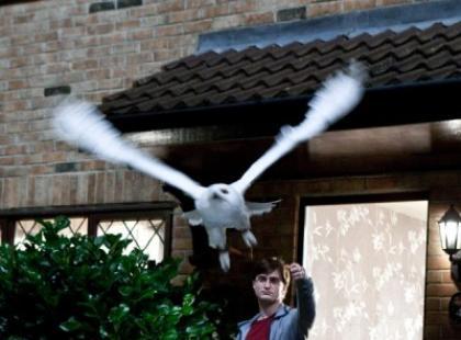 Harry Potter i Insygnia Śmierci (reż. David Yates)