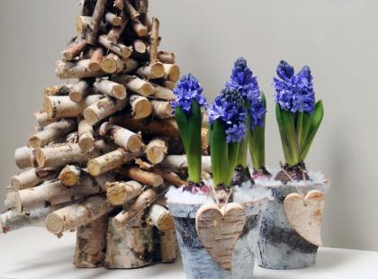 Hiacynt - ciekawe aranżacje na święta
