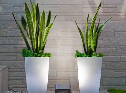 Hit! 6 roślin doniczkowych, które oczyszczają powietrze