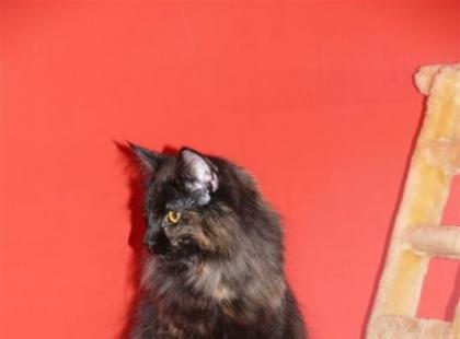 Hodowla kotów - bardzo luksusowe hobby