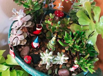 Hodujesz kwiaty? Ten magiczny trend związany z uprawą roślin w 2017 podbije cały świat! Hit czy kit?