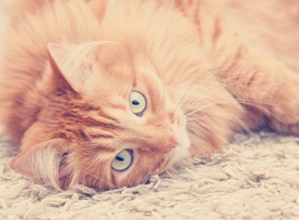 Imię dla kota: kilkaset propozycji