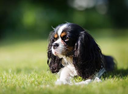 Imię dla psa - jak nazwać swojego psiego przyjaciela?