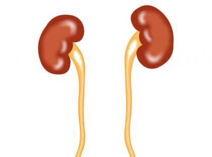 Infekcje układu moczowego – jak im zapobiegać?