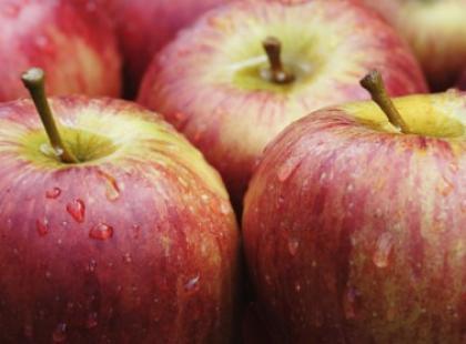 Jabłko - przebój jesieni
