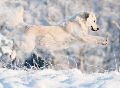 Jak chronić psa przed śniegiem i mrozem?